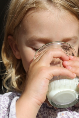 Do I want my toddler to drink cows milk @ healthyfoodiebaby